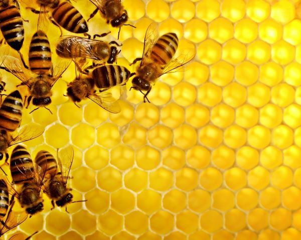 Honey has a fructose and glucose composition almost equal to that of 100% invert sugar